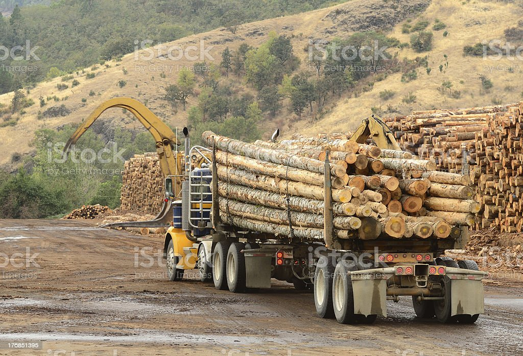 Log Yard stock photo