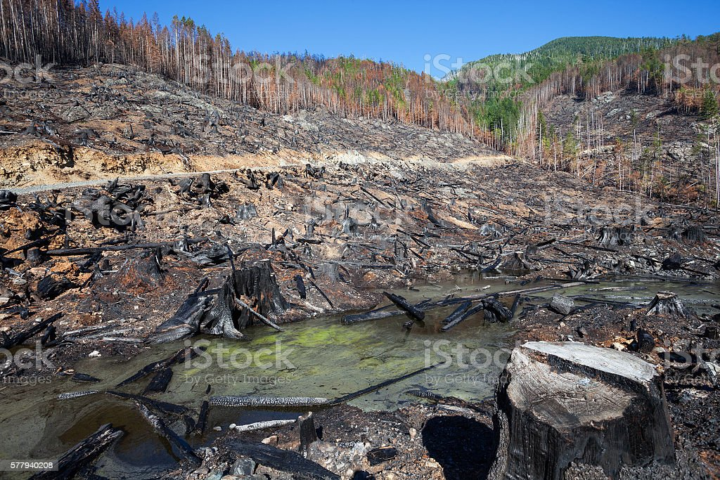 Logging and Fire stock photo