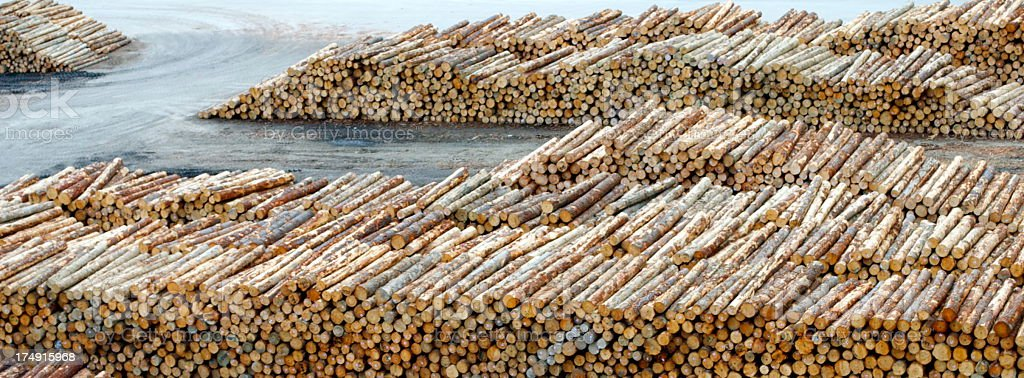 Logging Background royalty-free stock photo