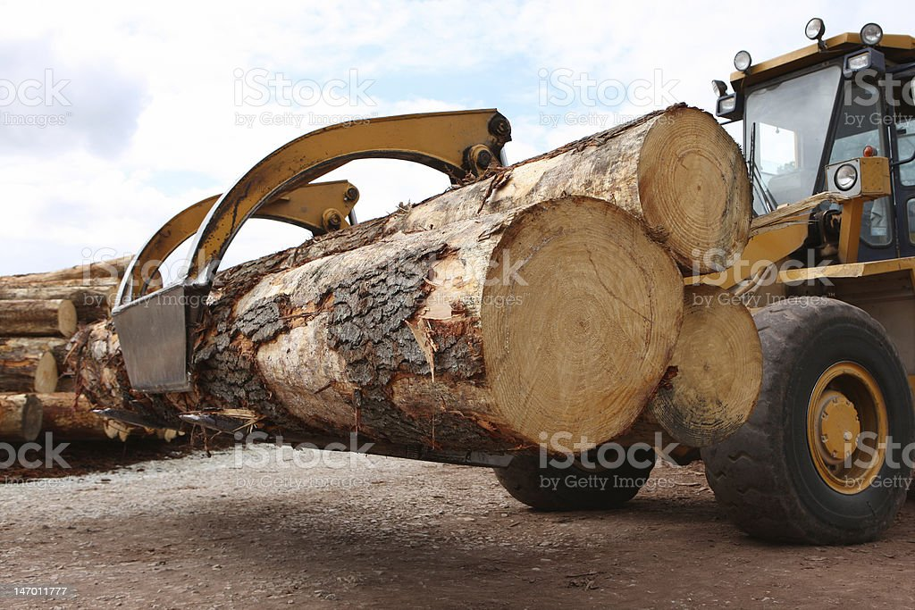 Logging Industry stock photo