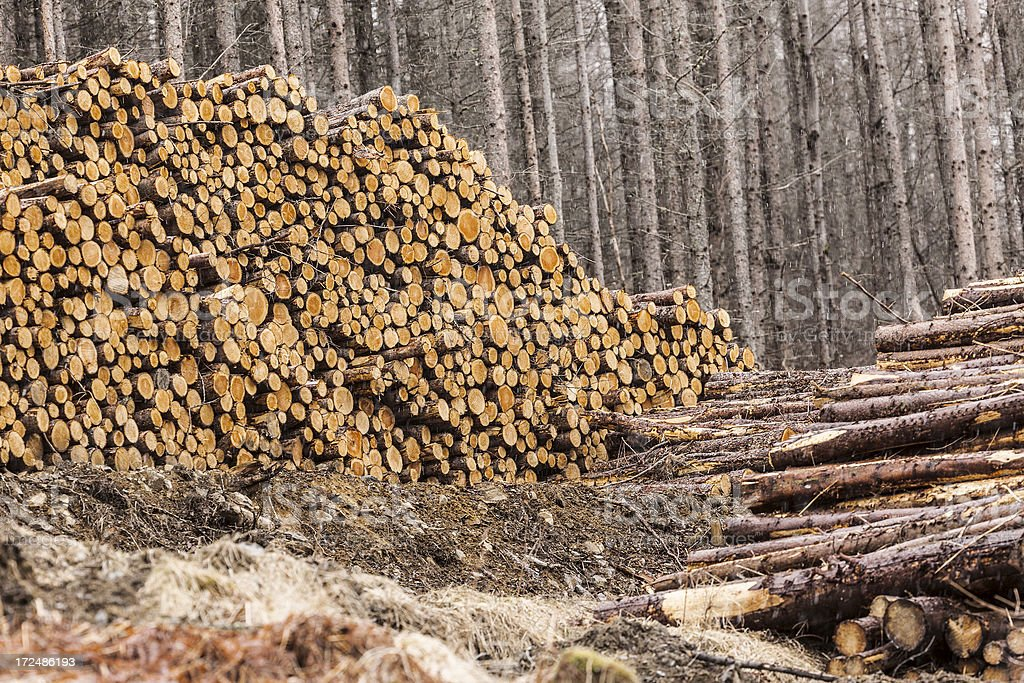 Logging Industry royalty-free stock photo
