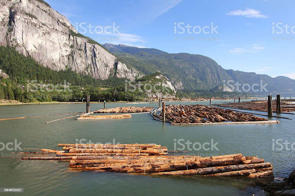 Logging Industry stock photo