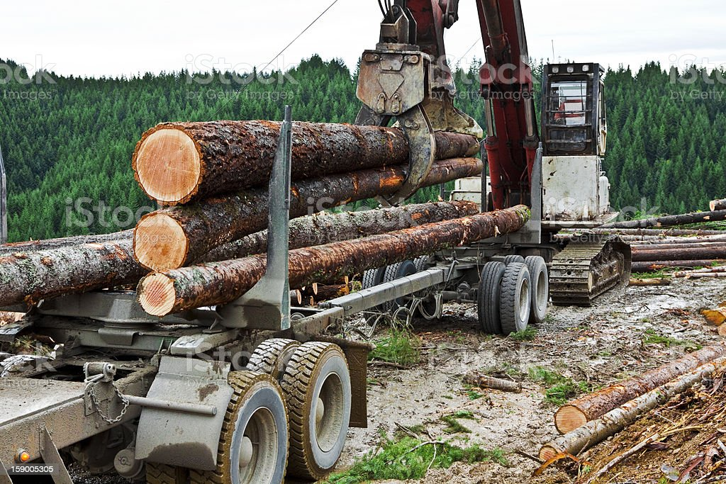 Logging Loading Logs stock photo