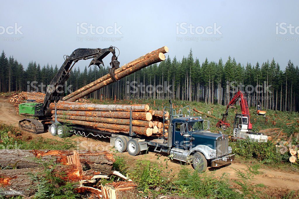 Logging machines grabbing logs and putting them on the truck stock photo