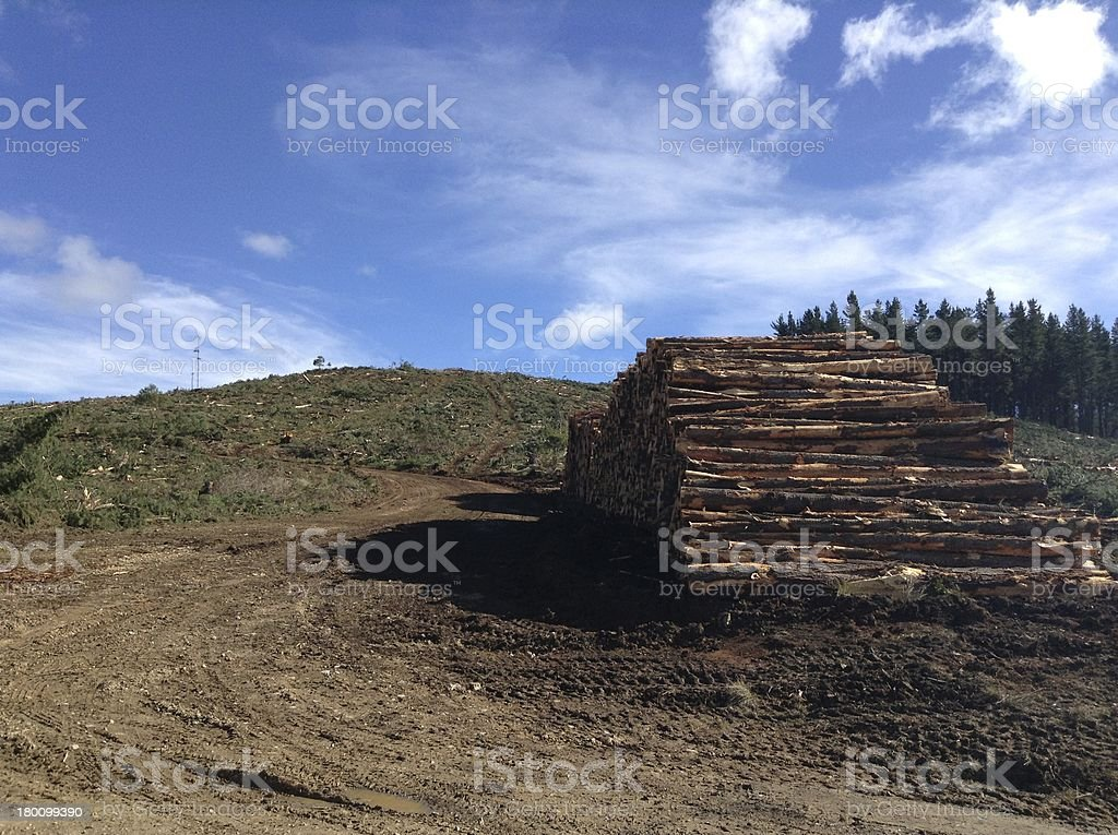 Logging of the trees royalty-free stock photo