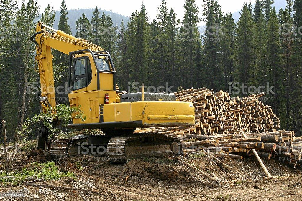 Logging # 5 royalty-free stock photo