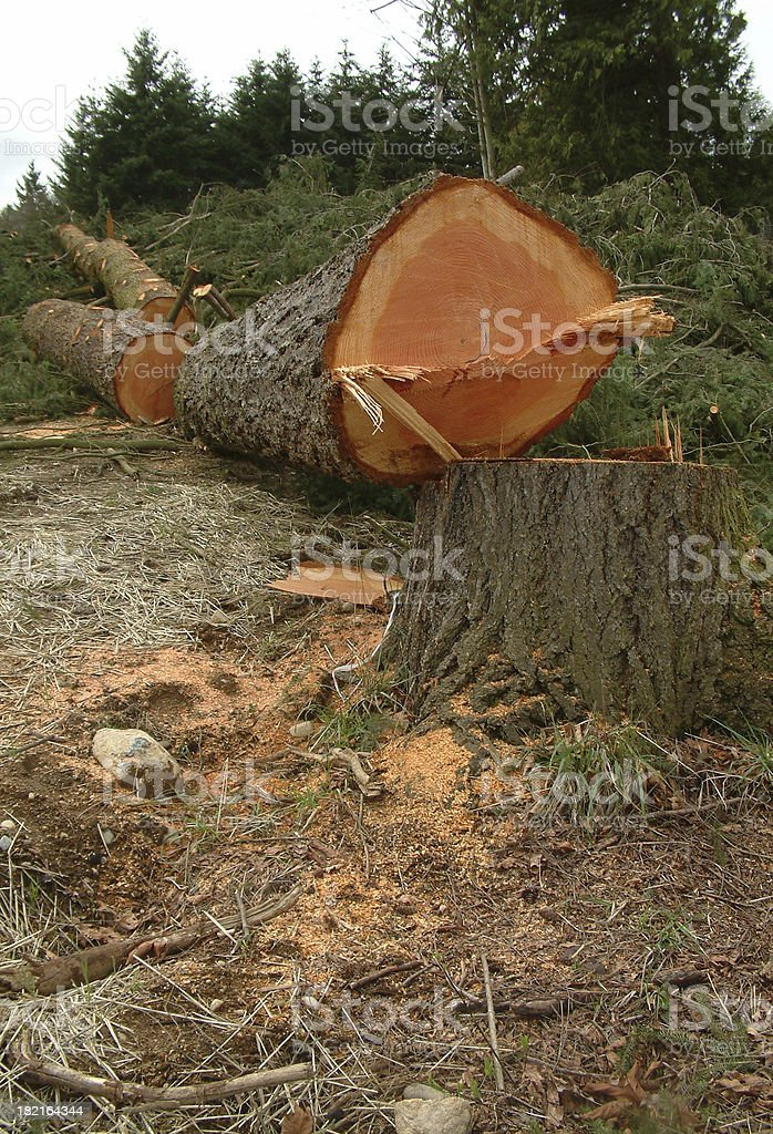Logging royalty-free stock photo