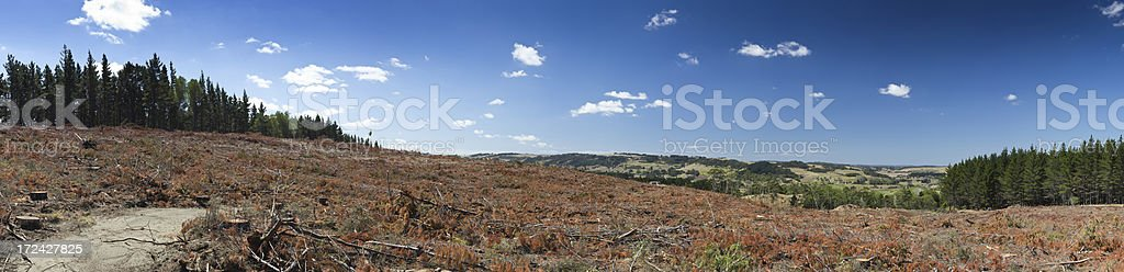 logging pine tree forest panorama royalty-free stock photo