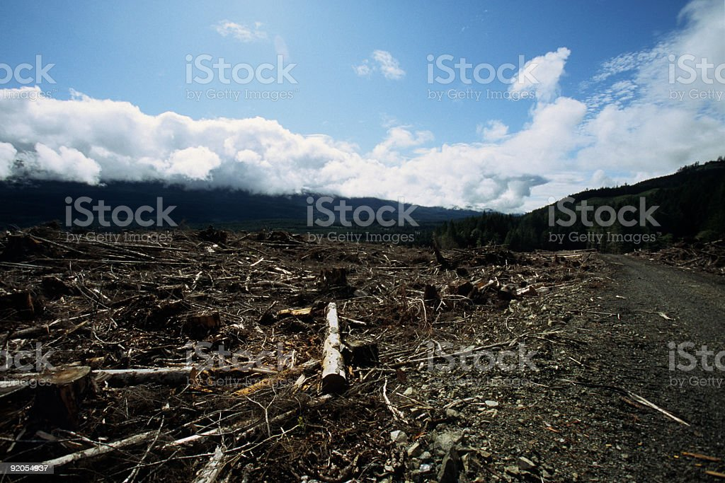Logging Road royalty-free stock photo