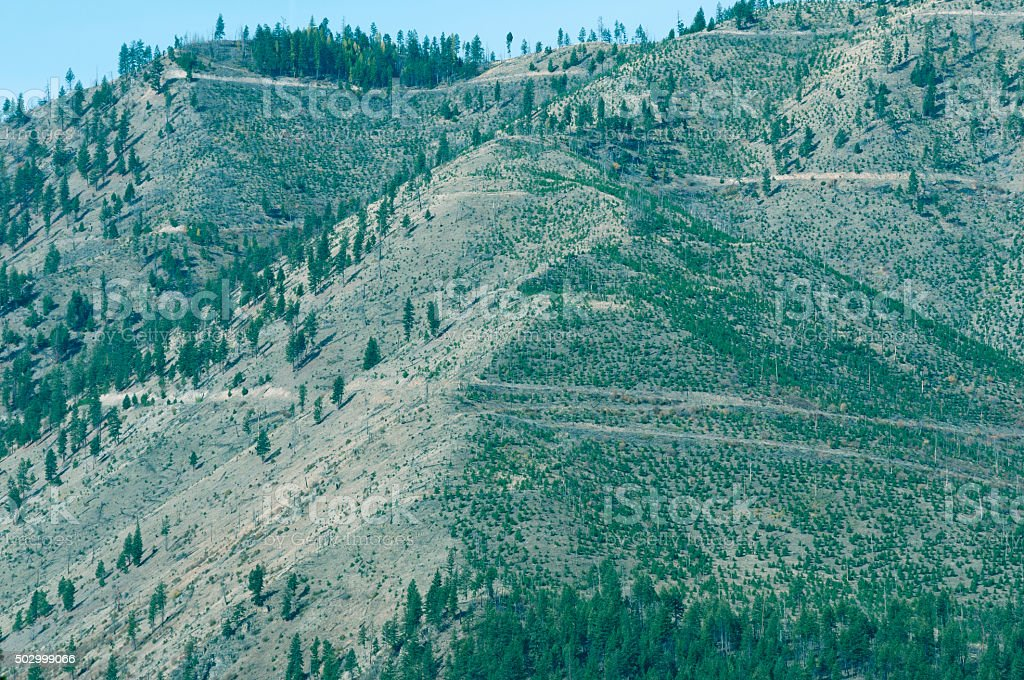 Logging roads to mountain summit in western Montana stock photo