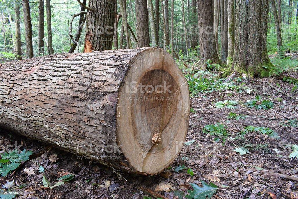 Logging Site in Pennsylvania. stock photo