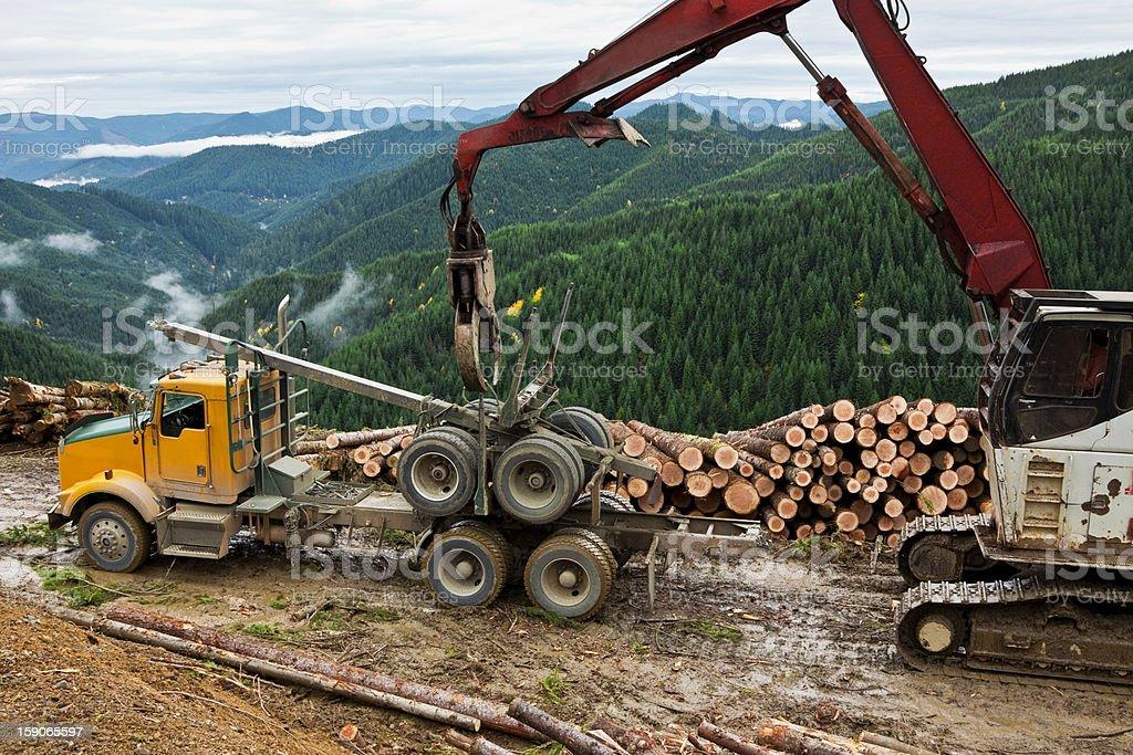 Logging Unloading Log Truck Trailer stock photo