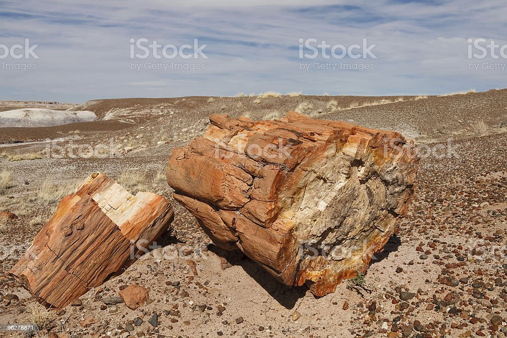Logs at Petrified Forest National Park, Arizona royalty-free stock photo