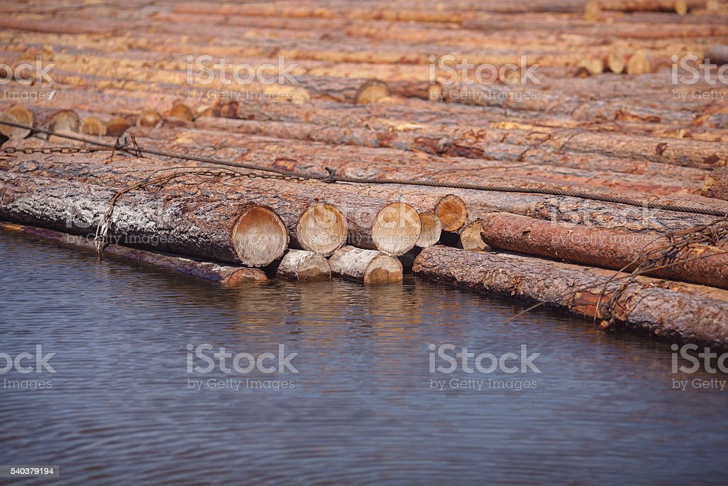 logs floating on river stock photo