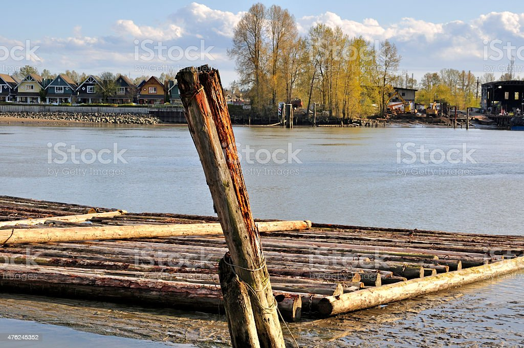 Logs floating stock photo