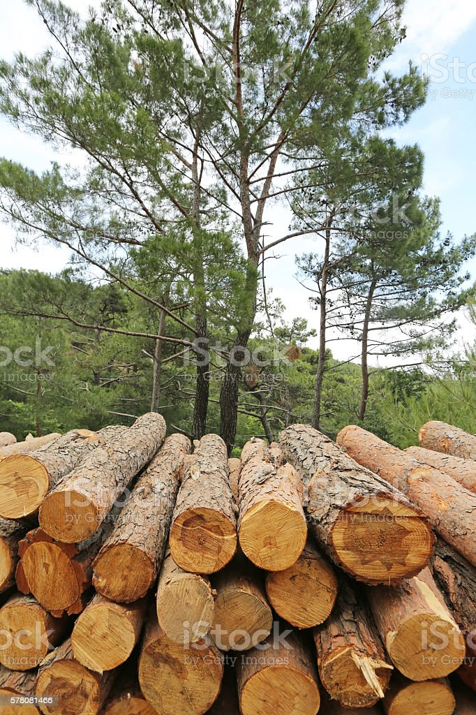 Logs of woods depicting deforestation stock photo
