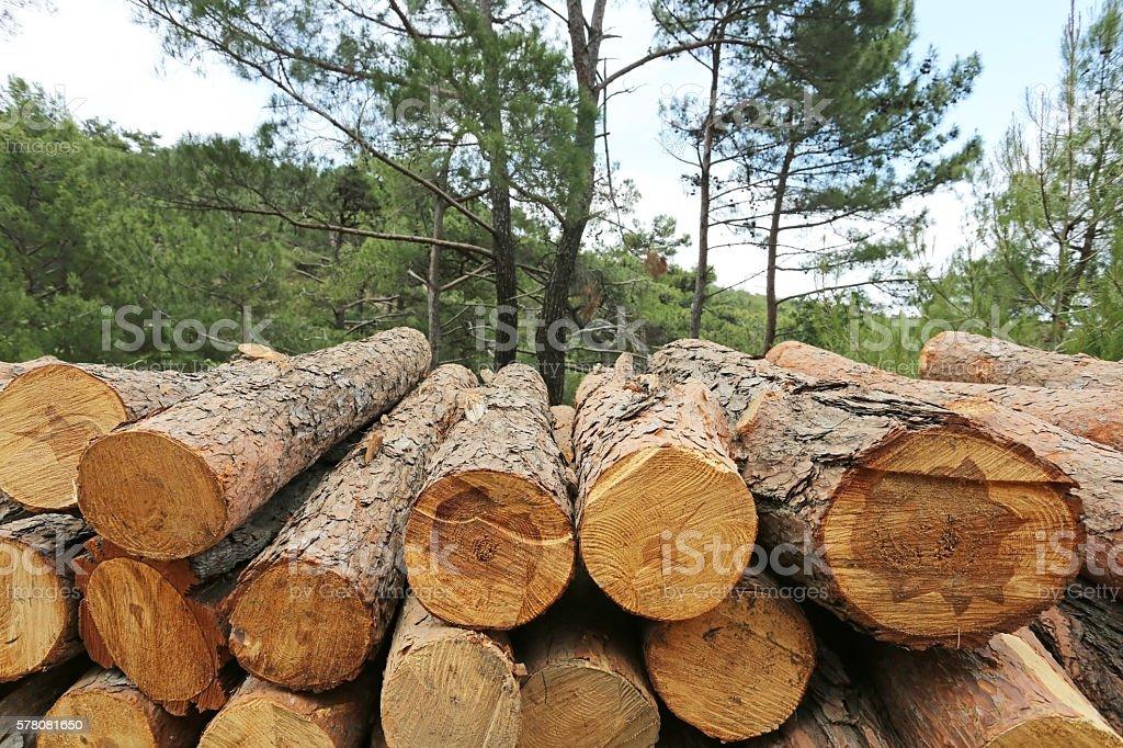 Logs of woods depicting deforestation stock photo
