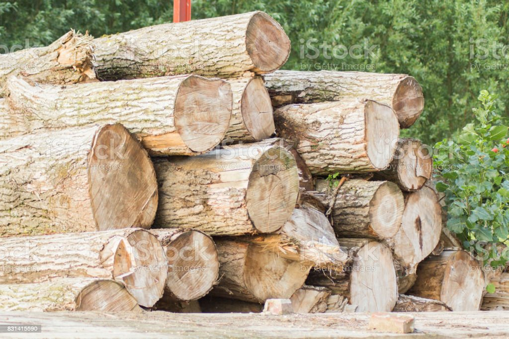 logs stock photo