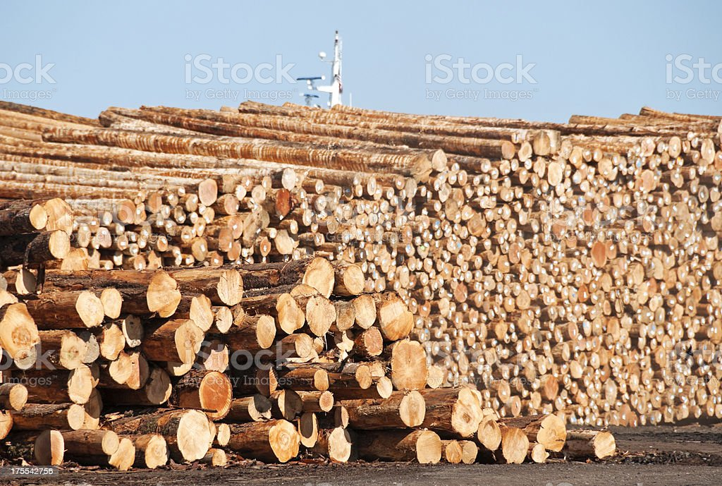 Logs stacked in lumberryard for export to Asia stock photo
