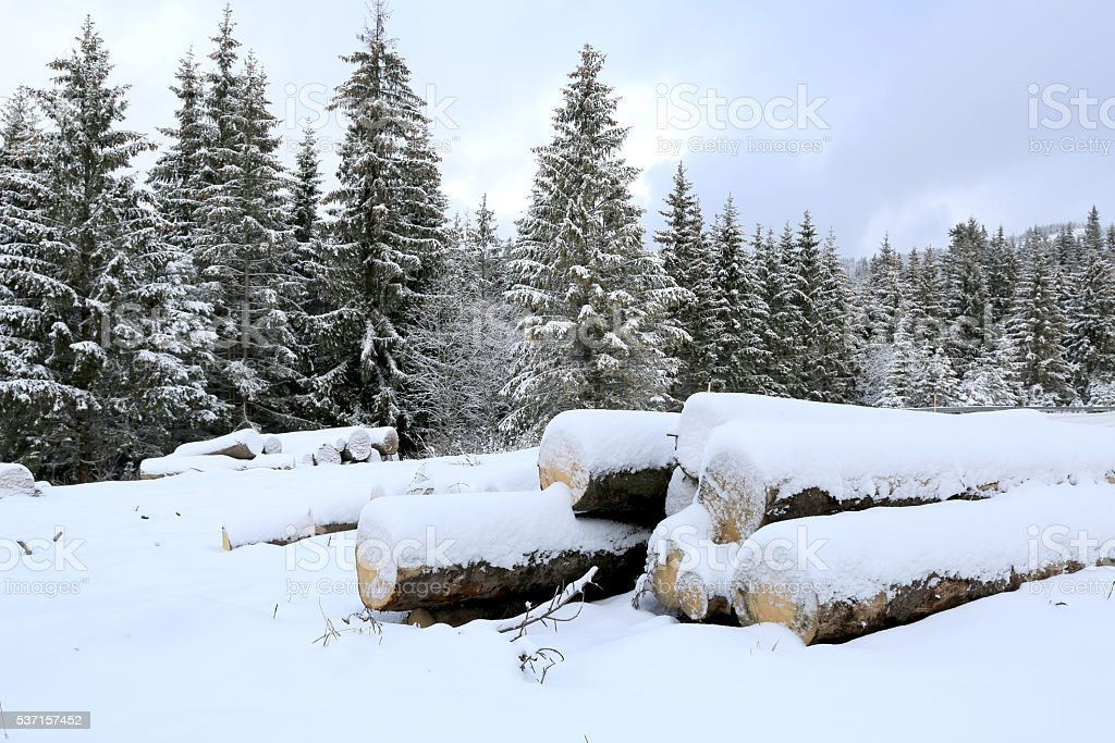 logs under snow on winter meadow in forest stock photo