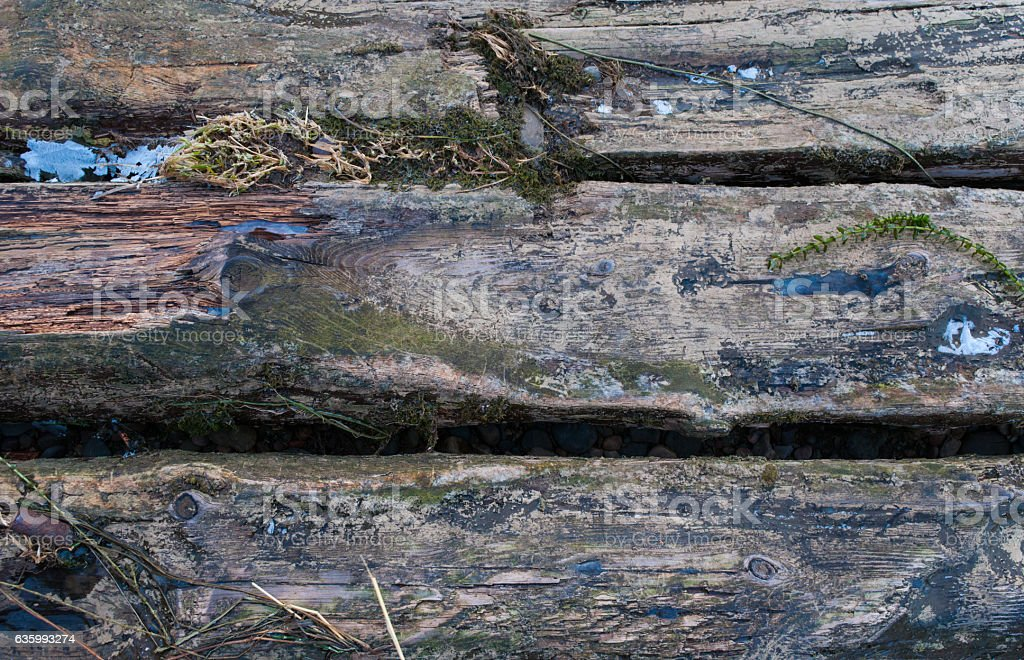 logs with ice and green grass stock photo