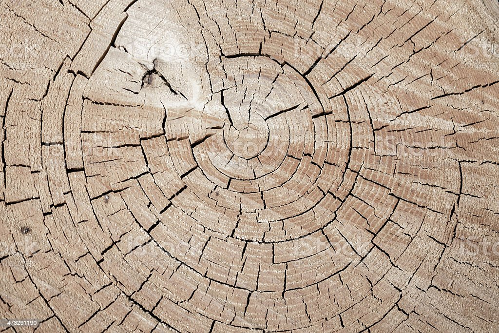 Toras de fundo de textura de madeira foto royalty-free