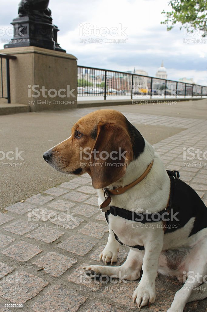 London dog stock photo