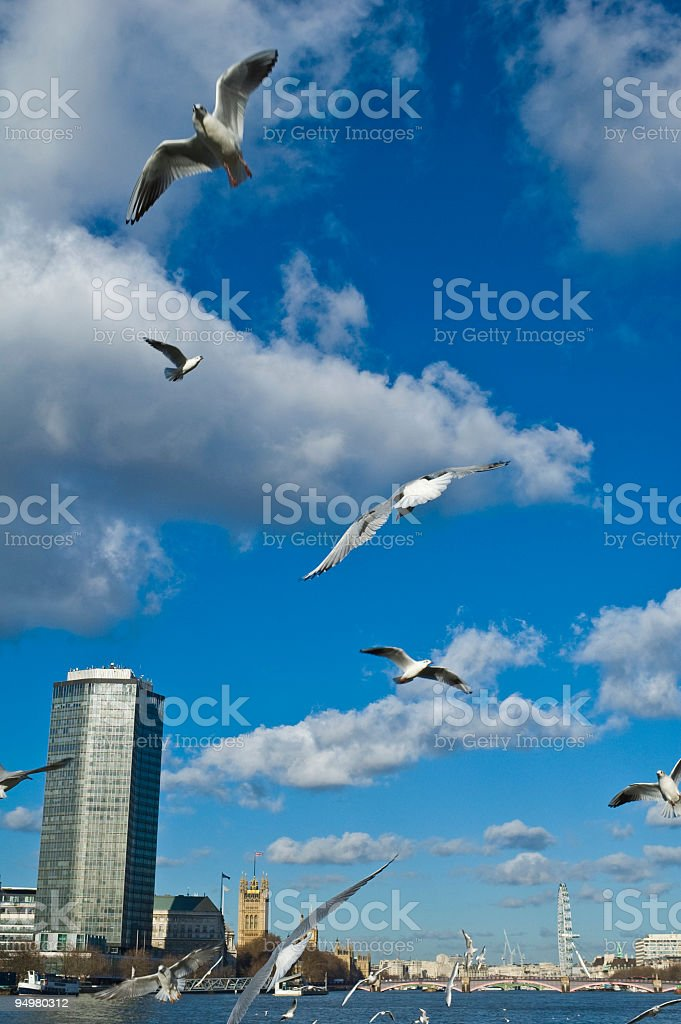 London gulls and landmarks stock photo