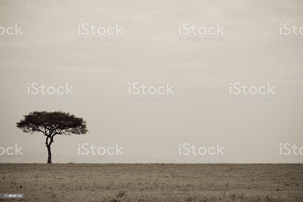 Lone Acacia du Masaï Mara photo libre de droits