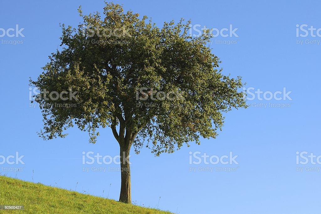 Lone apple tree royalty-free stock photo