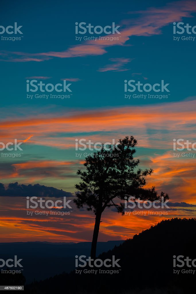 Lone Arizona Tree at sunset stock photo