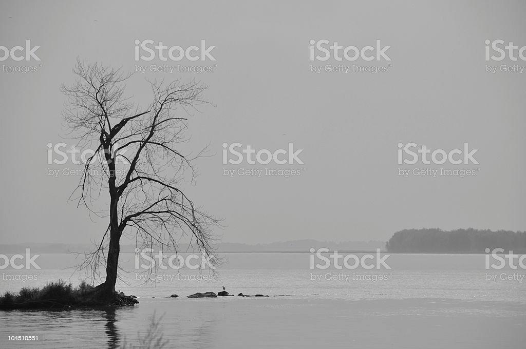Lone barren tree in a misty fog. stock photo