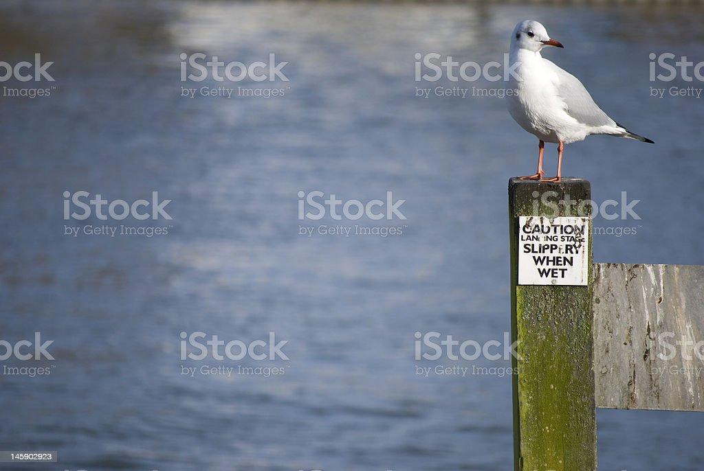 Lone bird com vista para o rio foto royalty-free