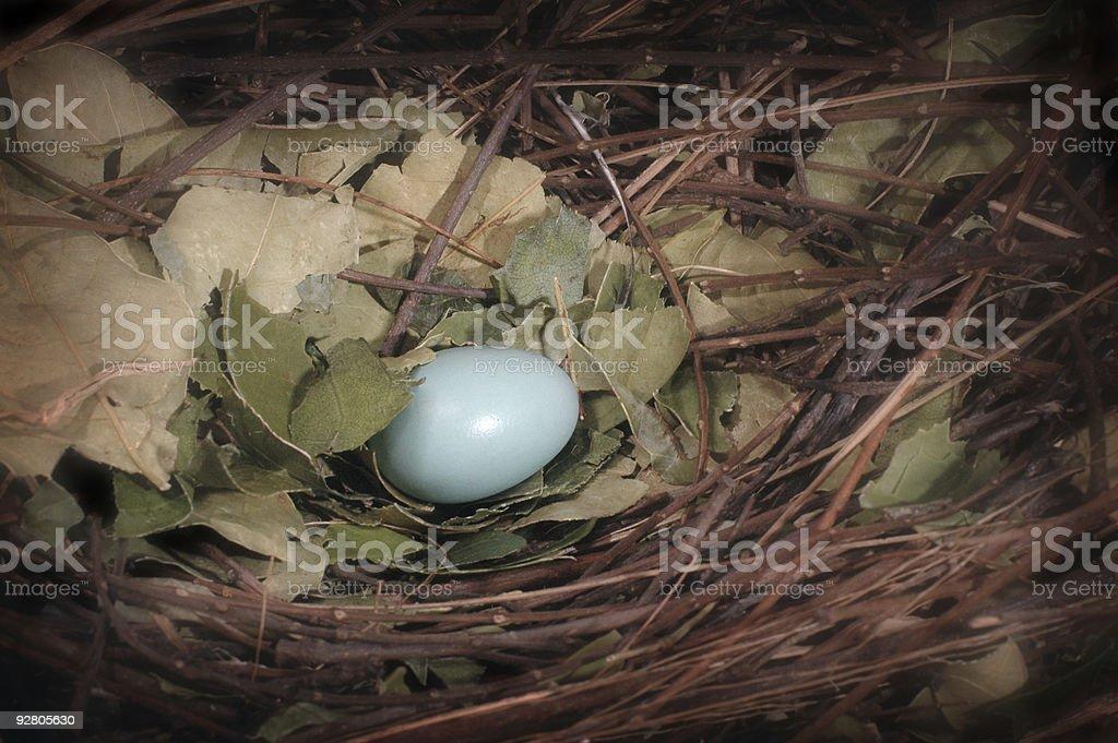 Lone Blue Egg royalty-free stock photo