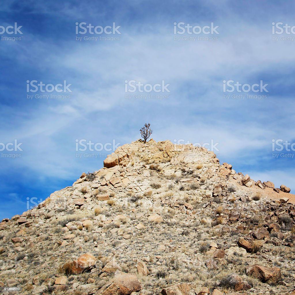 lone cactus on a hill stock photo