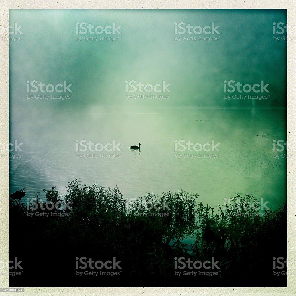 Lone Canada Goose stock photo