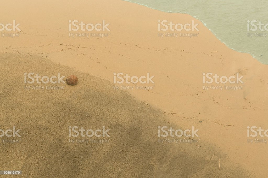 Lone Coconut Washed Up on a Beach stock photo