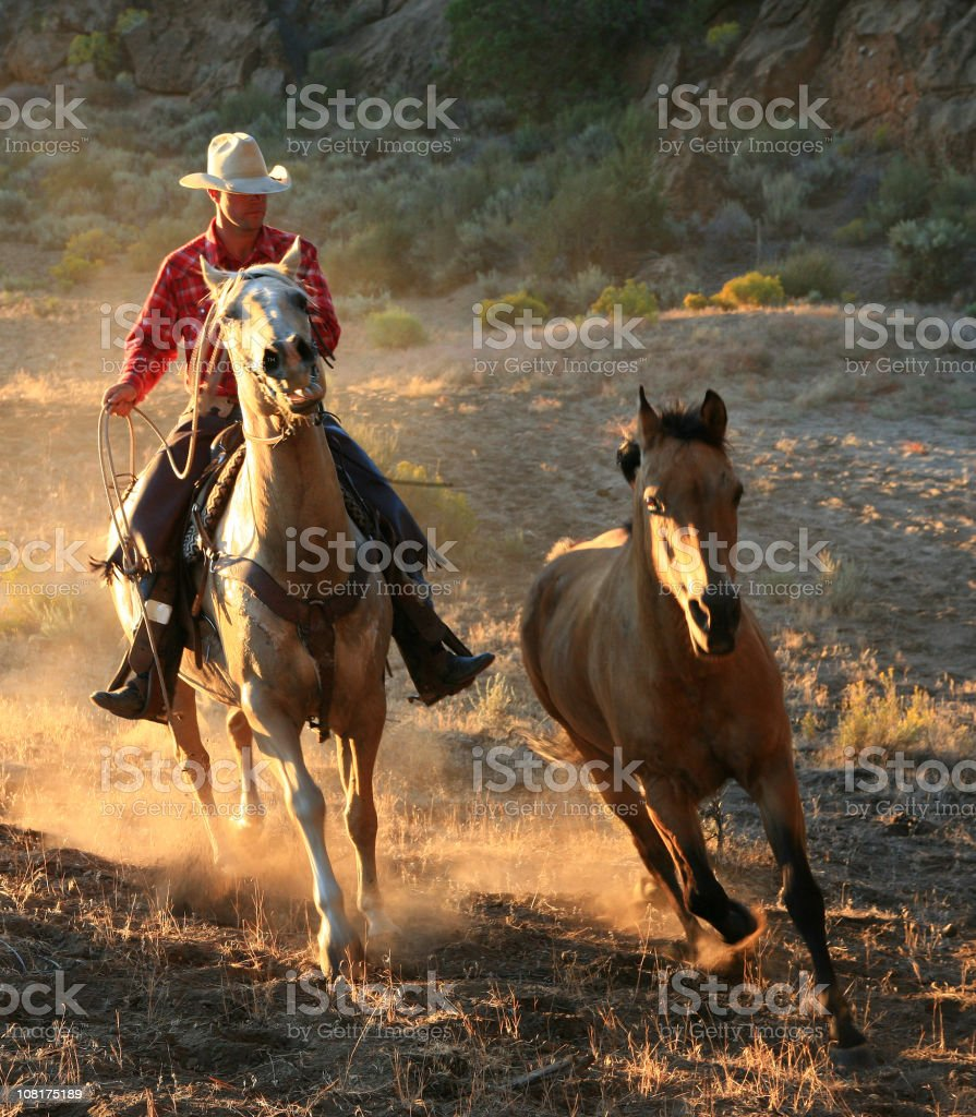 Lone Cowboys after wild stallion royalty-free stock photo