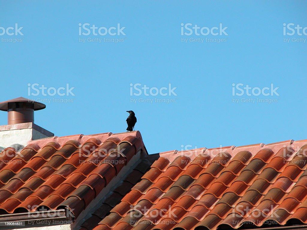 Lone Crow royalty-free stock photo
