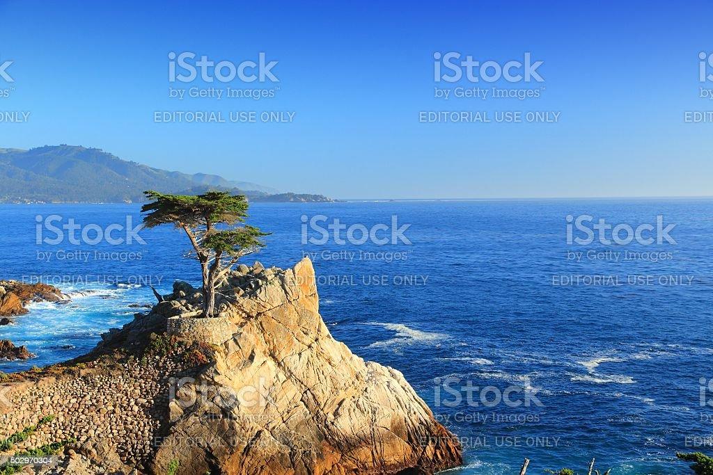 Lone Cypress, California stock photo
