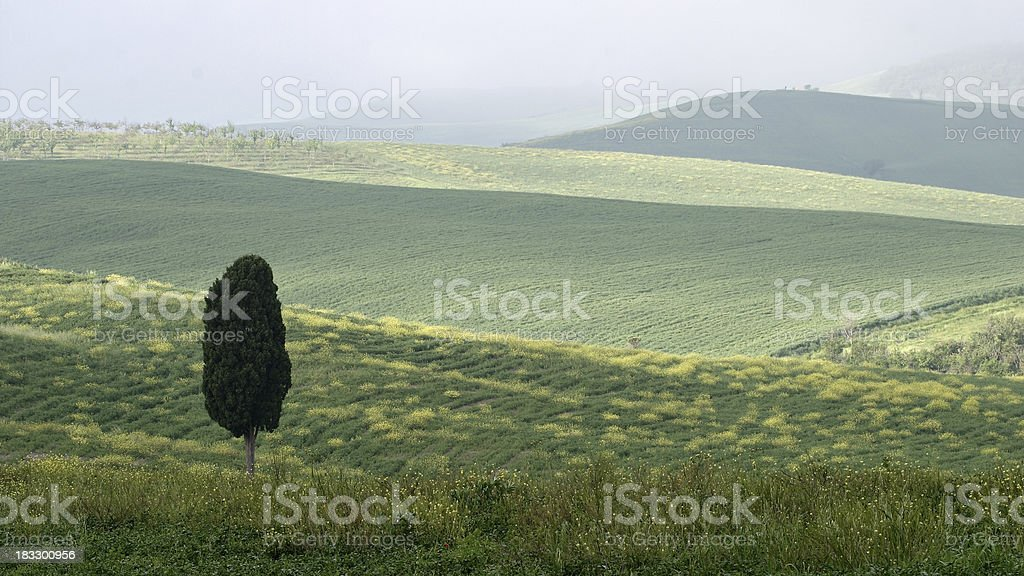 Lone Cypress stock photo