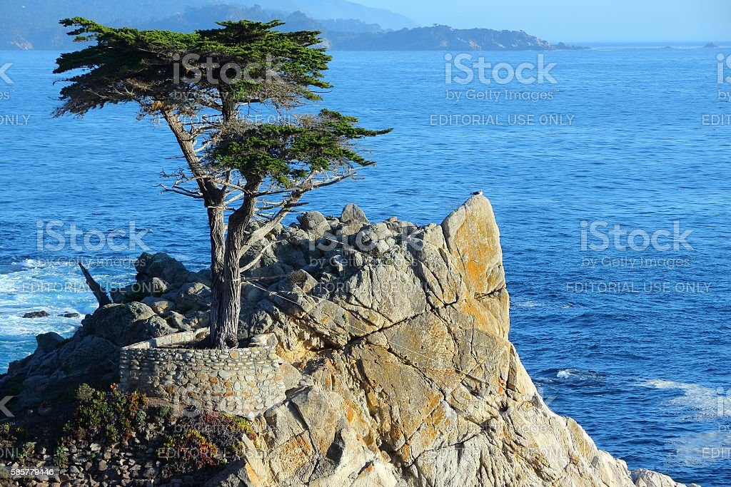 Lone Cypress stock photo
