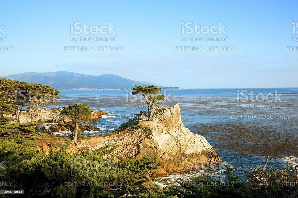 Lone Cypress Pine Tree at Pebble Beach CA stock photo