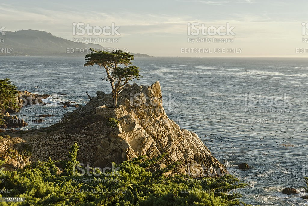 Lone Cypress Pine Tree at Pebble Beach stock photo