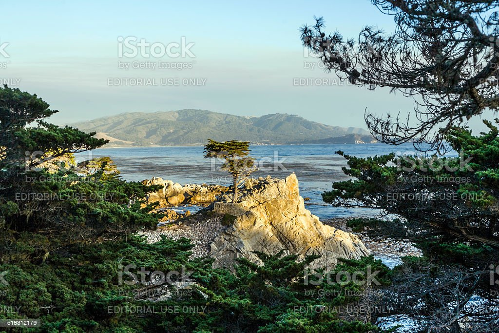 Lone Cypress tree view along  17 Mile Drive in Monterey stock photo