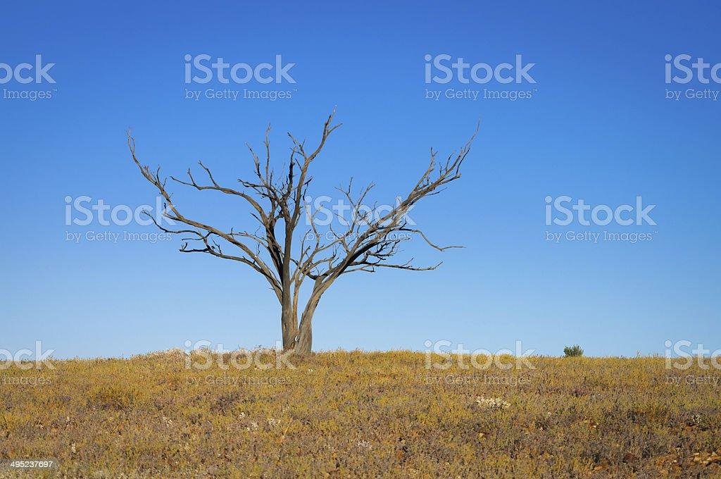 lone dead tree stock photo