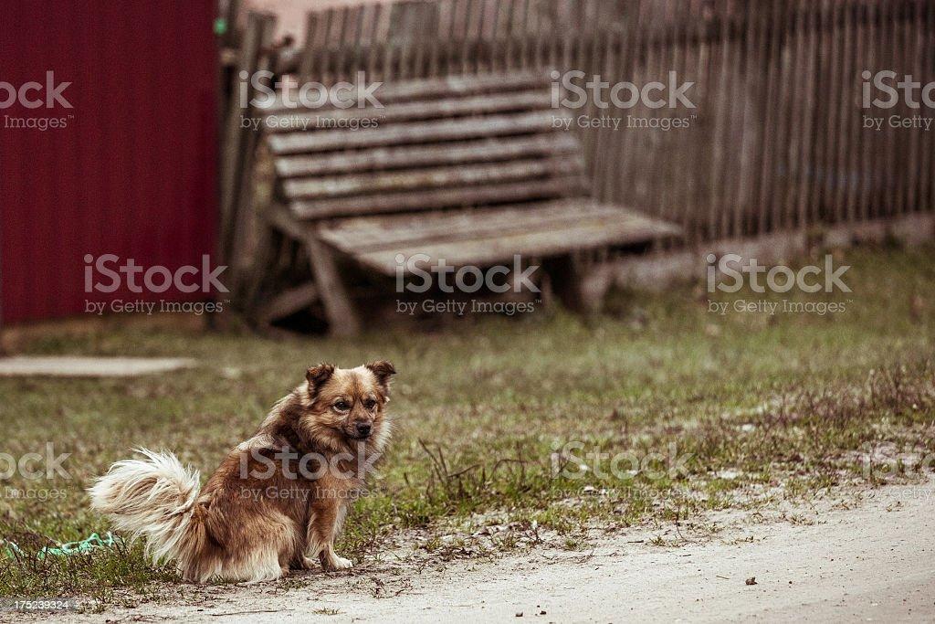 Lone dog in village street royalty-free stock photo