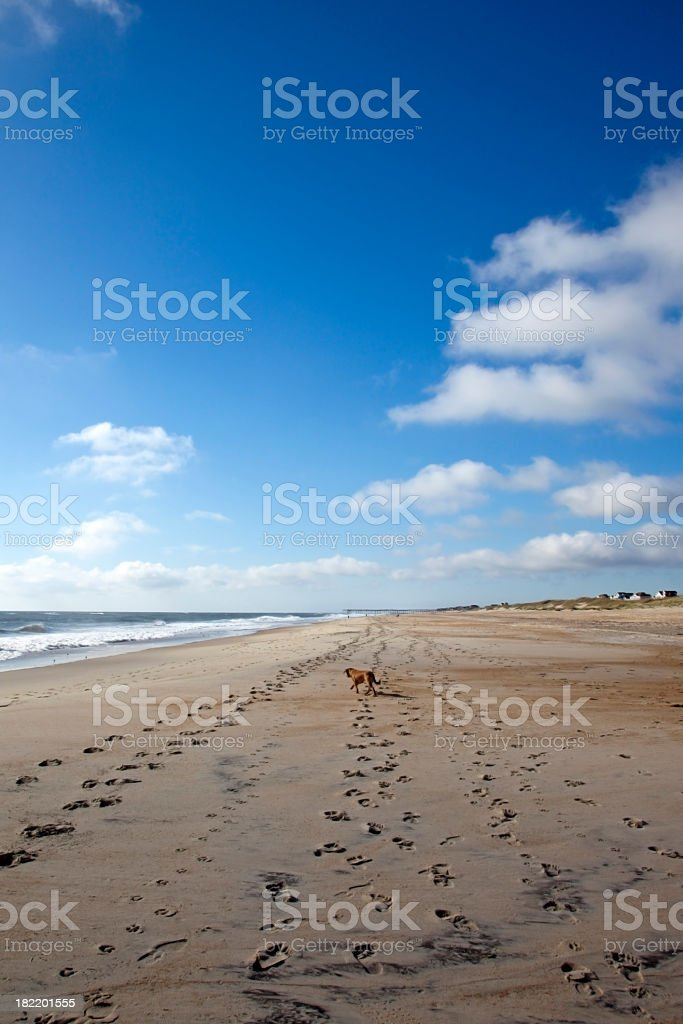 Lone Dog on a Beach royalty-free stock photo