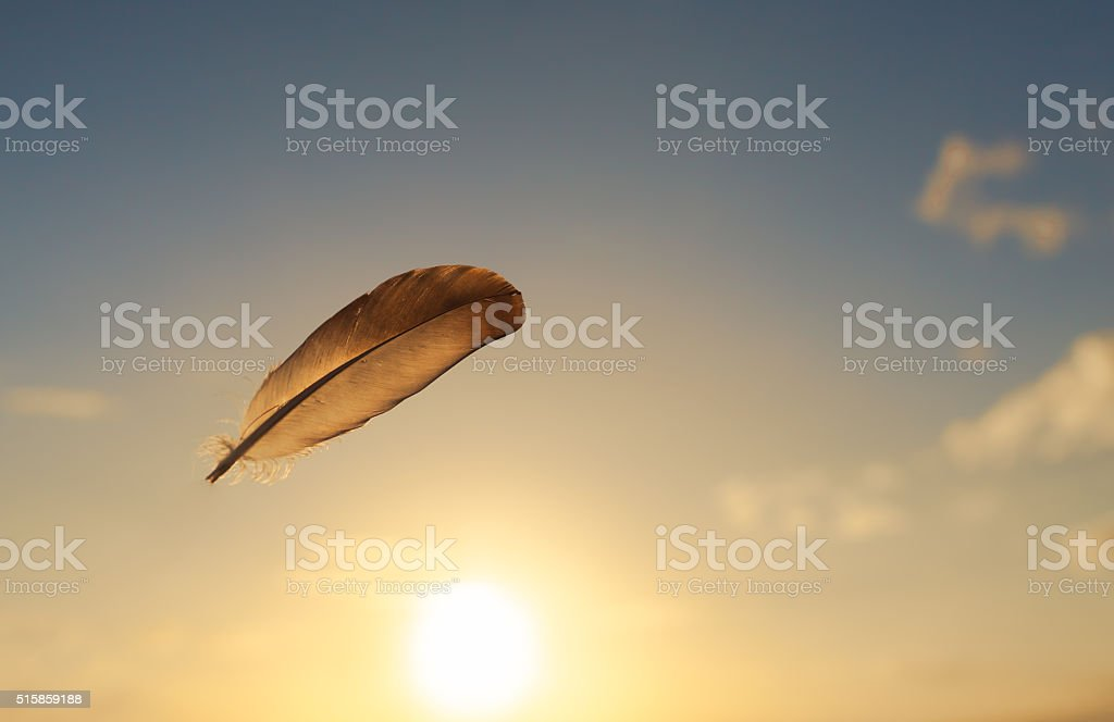 Lone feather in the sky. stock photo