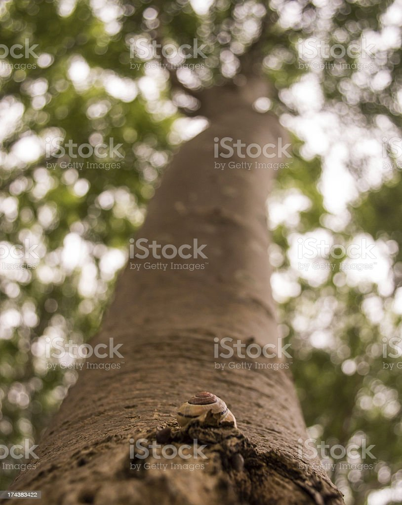 Lone Garden Snail on Tree Bark royalty-free stock photo